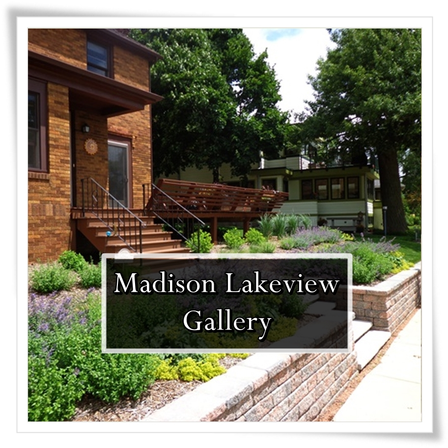 Button to Madison Lakeview Landscape Gallery/Portfolio