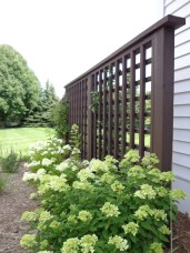 Trellis installed with Hydrangea hedge in front