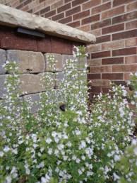 Freestanding wall adjacent to perennials