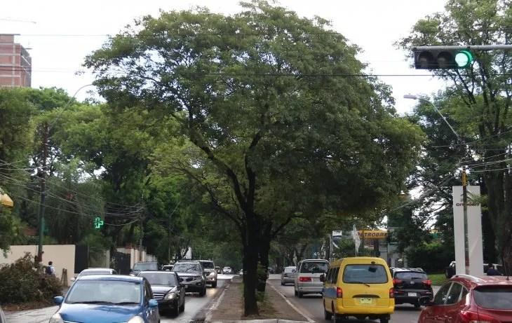 Asunción censa sus árboles para conocer el patrimonio verde la capital.
