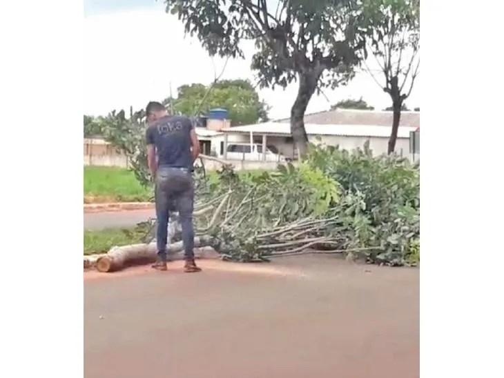 Cortes. Un personal de la Municipalidad poda los árboles.