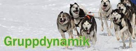 hur fungerar du i grupp gruppdynamik