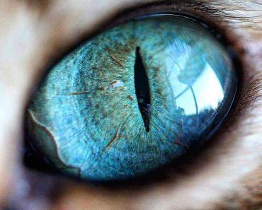 kattens ögon, kattögon