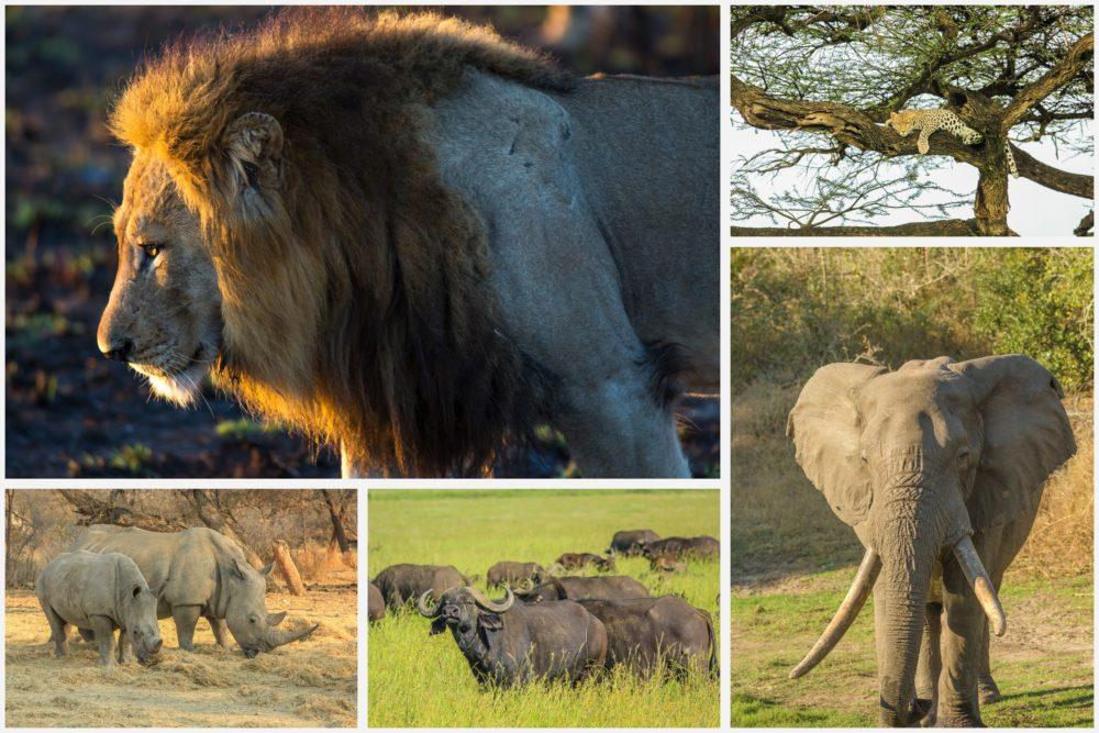 resor, resa, Sydafrika, nationalpark, safari, safari i Sydafrika, vilda djur, big five, lejon, leopard, elefant, buffel, noshörning, safaridjur