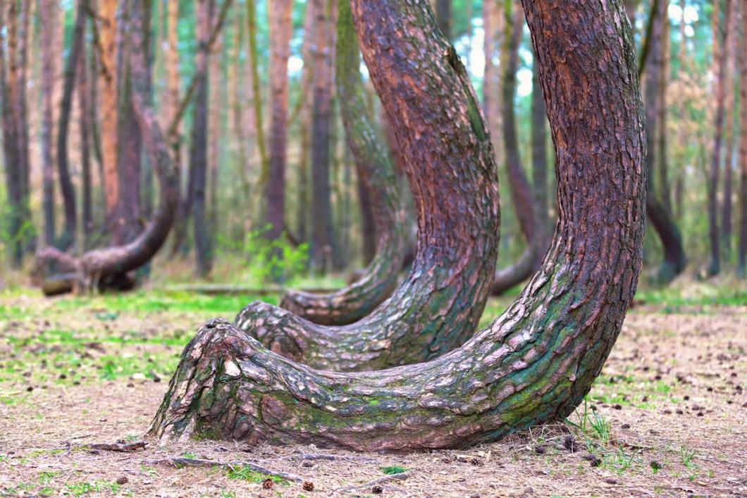 vackraste skogarna i världen, skogar i Polen, resa till Polen