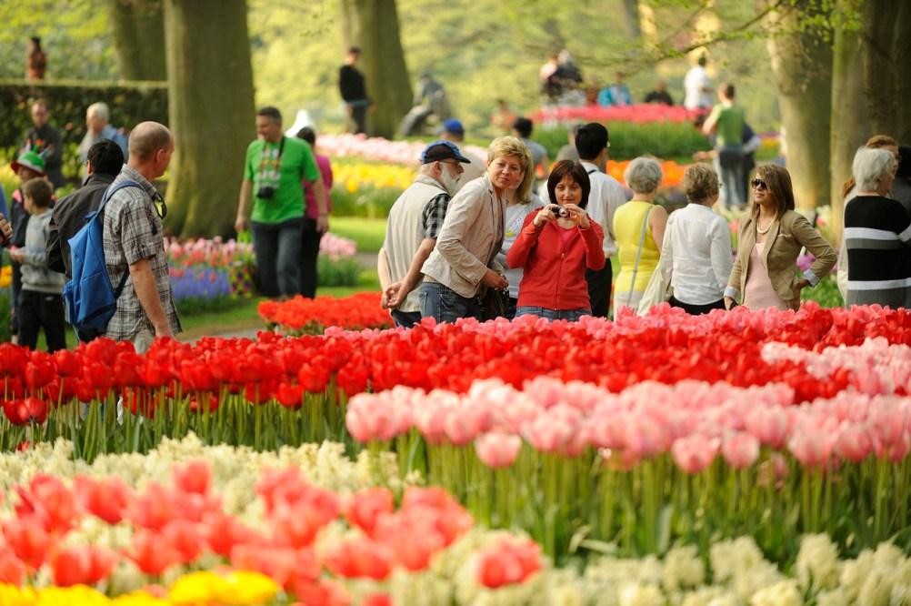 tulpaner i Holland, trädgårdar i Holland, saker att göra i Holland, sevärdheter i Holland, saker att göra i Nederländerna, sevärdheter i Nederländerna