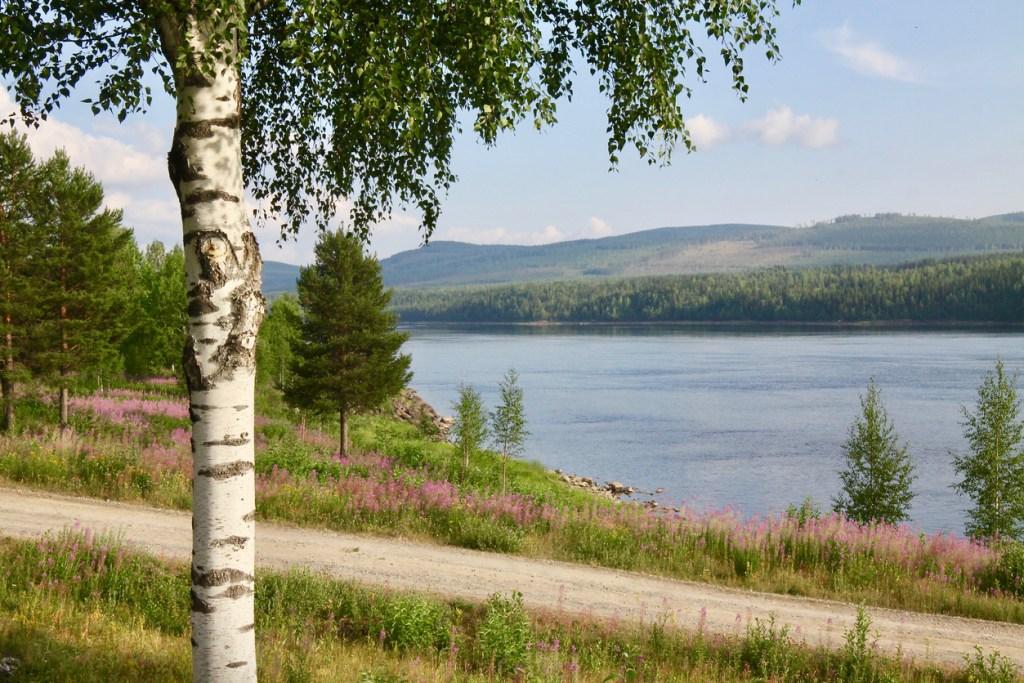 vilda blommor i Sverige, ätbara blommor, vilda växter, sommarblommor, sommarblomma
