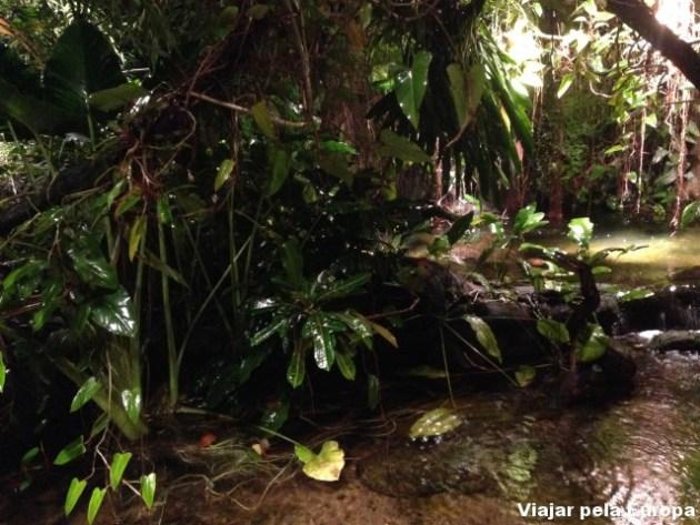 Florestinha assustadora do Acquaria de Estocolmo.