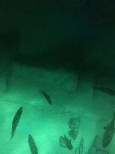 aquario de londres 4
