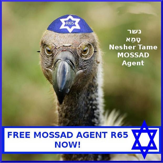 Pets of Mossad_06