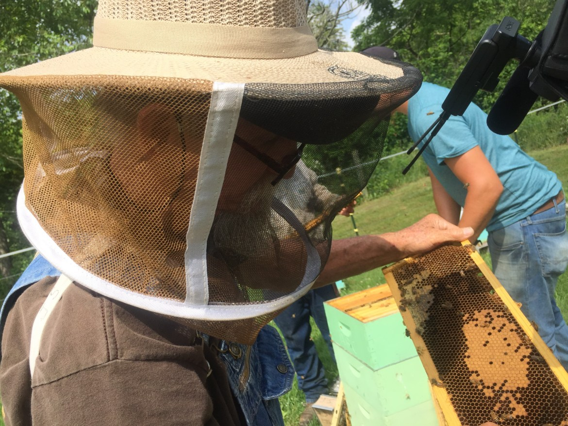 Former coalminer James Scyphers looks for the Queen bee from his beehive in West Virginia.