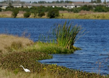 Trump's Rollback of US Water Protections Nears Completion