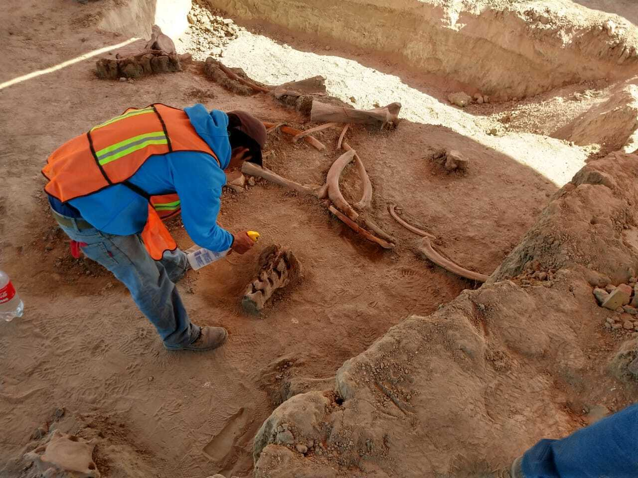 Archaeologists Unearth Remains of 60 Mammoths near Mexico City