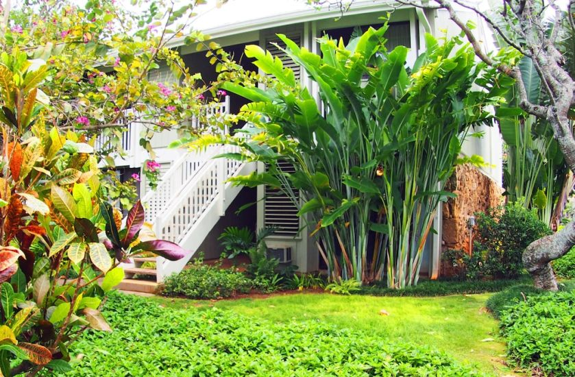 Photo of outside of unit showing lush tropical plants