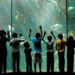 Temporarily Closed Two Oceans Aquarium