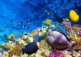 フランス領ポリネシアボラボラ島