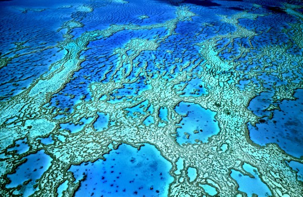 NASA Steps Up to Track the Shrinking of Earth's Coral ...
