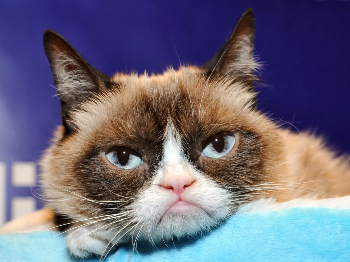 So Long to Grumpy Cat, Amazon's Special Warehouses, and More News 3