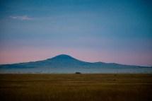 Kvällstur genom Serengeti, Tanzania