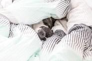 Valter gosar i sängen.