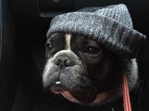 Hipsterhunden