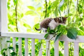 Kattunge på upptäcksfärd vid trappen.