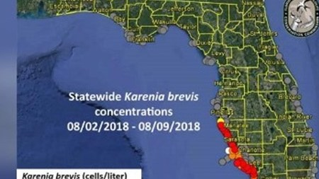 HD Decor Images » FWC releases new red tide map  reports respiratory irritation on     Respiratory irritation is being reported on Florida beaches as red tide  continues to pose problems