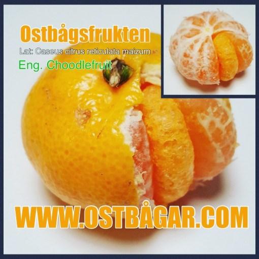 Ostbågsfrukten – Choodlefruit