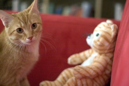 Watson & The IKEA Kitten