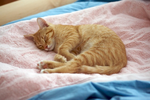 Watson's Peaceful Pink Slumber