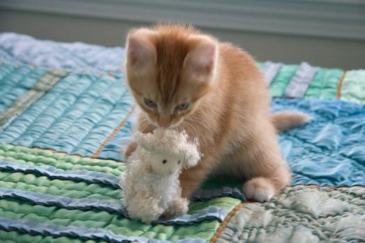 Om Nom Lambie
