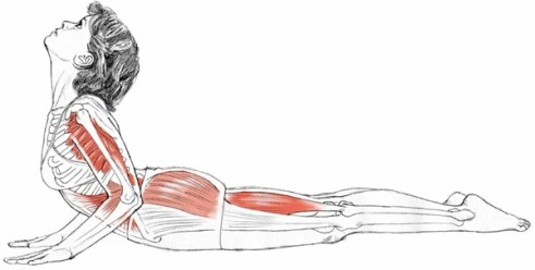 Kuvahaun tulos haulle Bhujang asana yoga