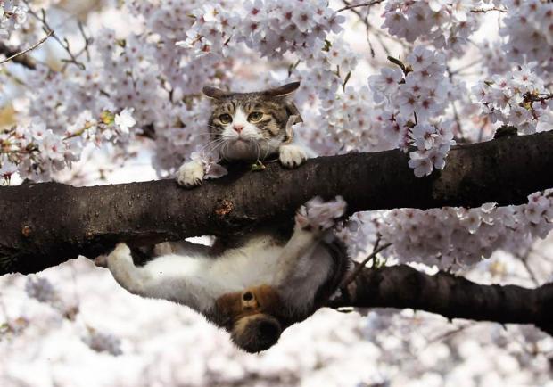 Cats are the animal kingdom's natural ninjas.