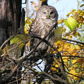Forests Ontario is helping landowners attract more wildlife to their properties through the 50 Million Tree Program.