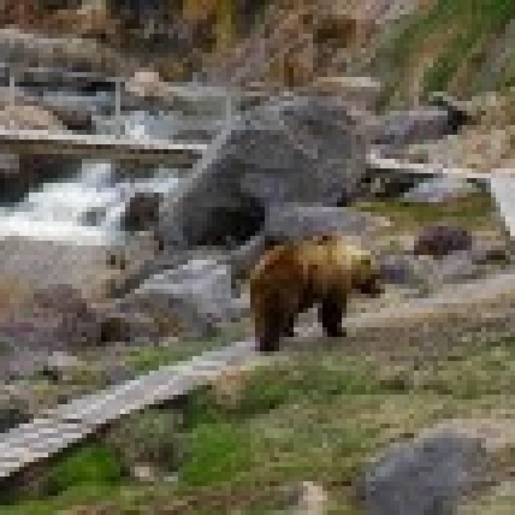 """Wenn der Bär beißt: Nastassja Martins Buch """"An das Wilde glauben"""""""