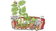Können Topfpflanzen sich auch mit Corona infizieren?