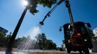 Teure Bäume, teures Gießen: In Stuttgart bekommt ein Baum Wasser