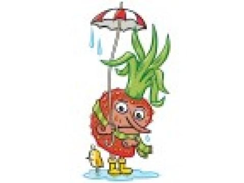 Halten Erdbeeren die Kälte aus?