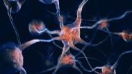 Mithilfe modernster Nanotechnologie wollen Forscher jedes menschliche Leben erlebbar machen.