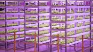 Rotlicht und Baulicht regen das Wachstum an: Eine vertikale Indoor-Farm in Pyeongtaek, Südkorea