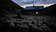 Vorm Schlafengehen Schäfchen zählen: Die Fähigkeit, mit den Tieren reden zu können, kommt auch diesem französischen Hirten zugute.
