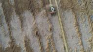 Ein Mähdrescher fährt in Petersdorf (Brandenburg) über ein Roggenfeld und drischt am 24. Juli den Roggen.