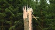 Der Forstwirtschaft wird nicht nur ein Ast abgesägt.