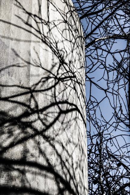 träd.foto: BelleBlue©Photo 2013