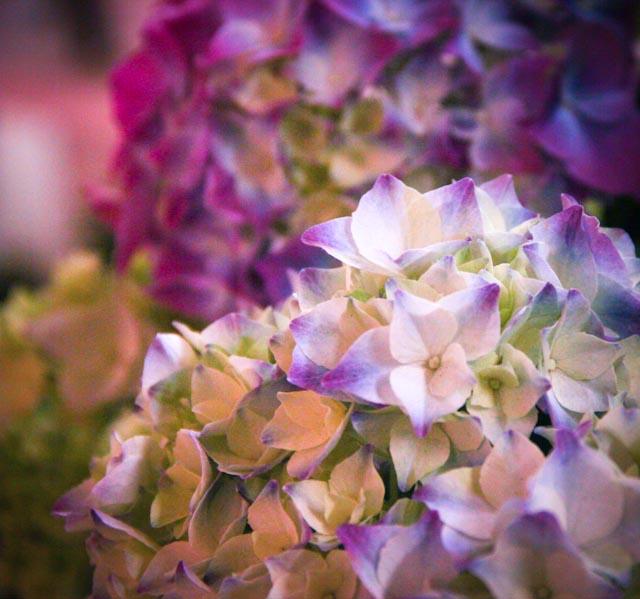 blommor.foto: BelleBlue©Photo 2013