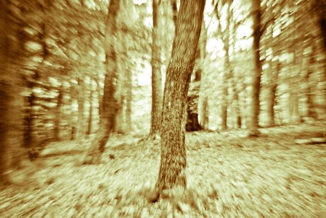 skog.fotoBelleBlue©Photo 2013