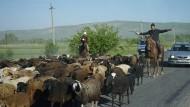 Unterwegs auf der Seidenstraße: die Sher-Dor-Medrese in Samarkand (oben) und eine Viehherde auf einer kirgisischen Landstraße zwischen Osch und Jalal-Abad.