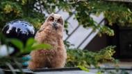 Ein Uhujunges sitzt auf einer Terrasse des Hundertwasserhauses.