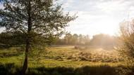 Im Hamburger Stadtteil Altengamme scheint die aufgehende Sonne auf eine Weide.