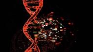 Die Wissenschaft versucht das Coronavirus besser zu verstehen. (Symbolbild)